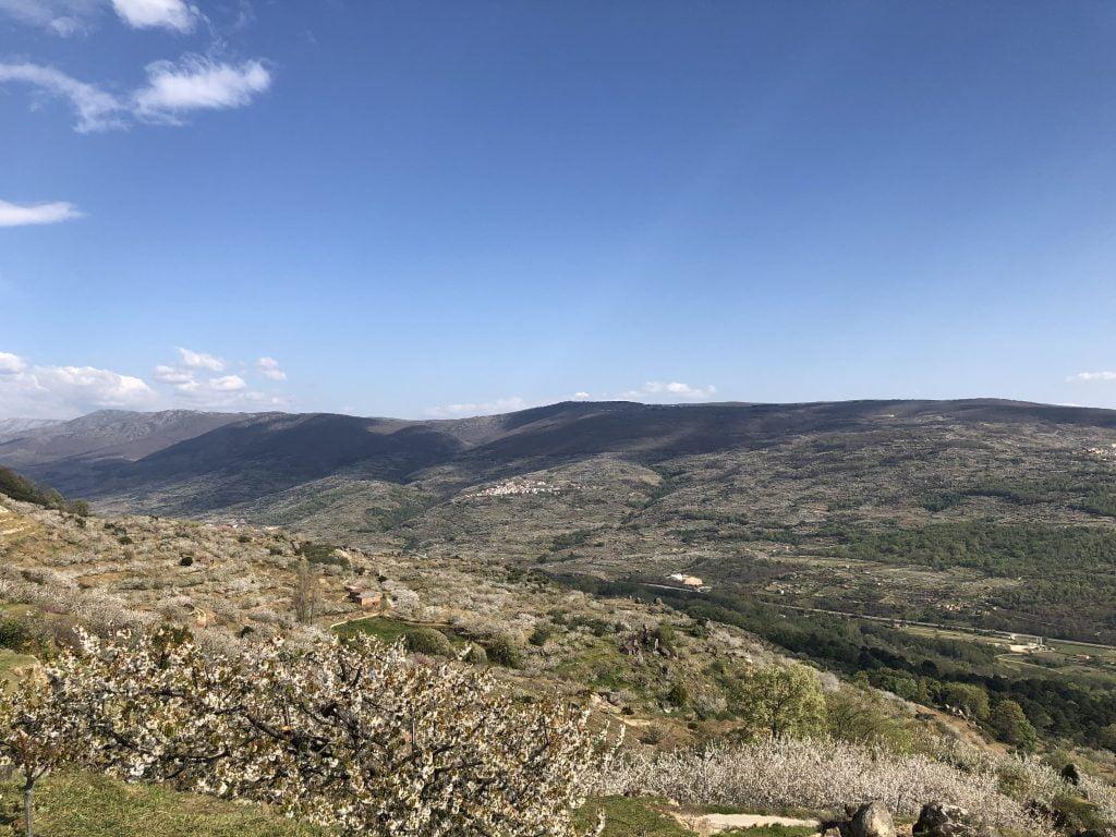 estado de floracion en el valle del jerte
