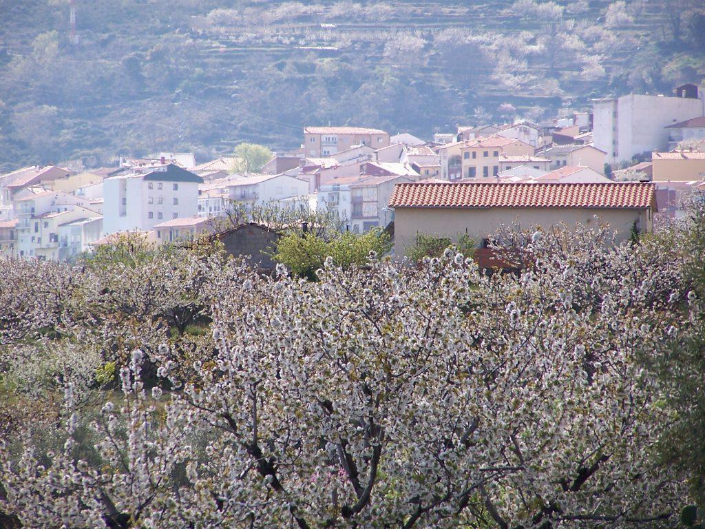 Valle del Jerte Floracion 2019